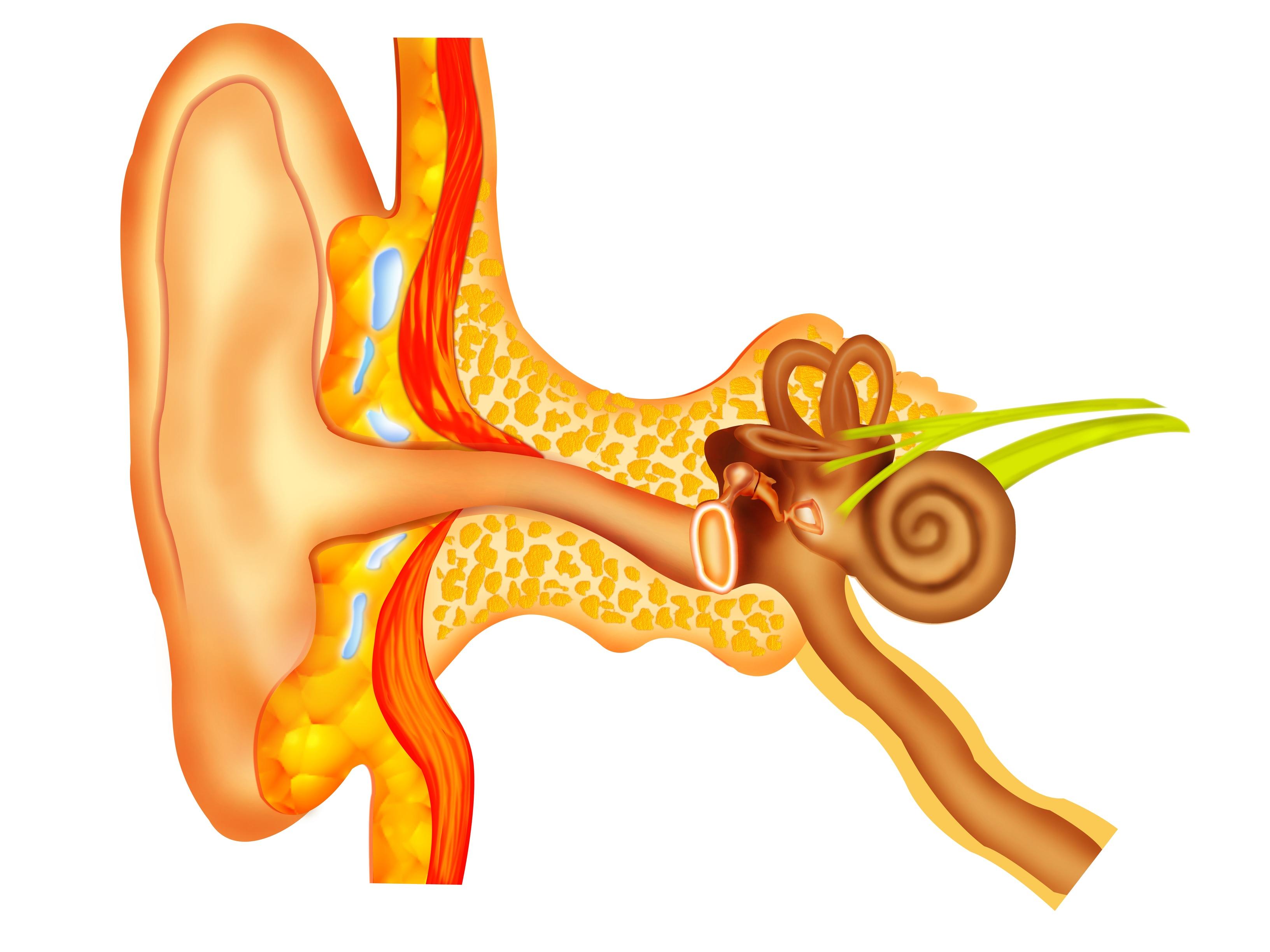 Eardrum repair