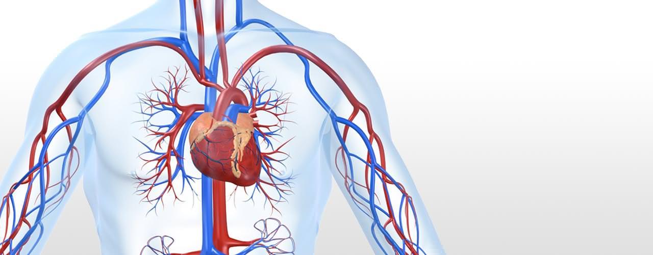 Cardiovascular Clinic
